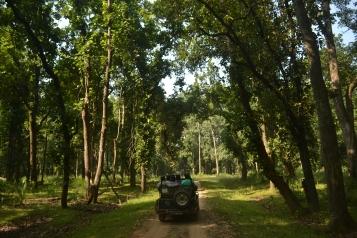 Safari ride, Bandhavgarh, Madhya Pradesh